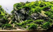 CAA 2015年IAPLC世界水草造景大赛第160名《巨人山谷》
