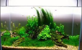 【造景欣赏】60cm缸水草生成之路。。。