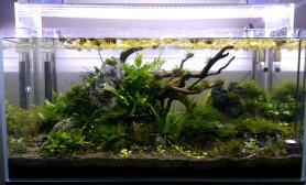 草缸一岁多水草缸发贴留念沉木杜鹃根青龙石水草泥