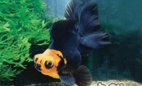 观赏鱼的生长周期介绍