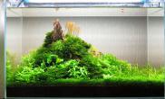 水草缸造景沉木水草泥化妆砂青龙石60CM尺寸设计64