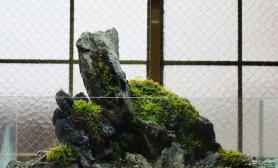 另类小清新:一口别开生面的苔藓石景缸鱼缸水族箱