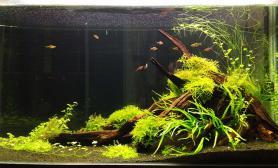 潜水太久了水草缸也发发南美学到的鱼缸水族箱双面造景
