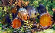 鱼的水霉病如何治疗(图)