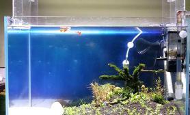 开缸小半年水草缸看腻了水草缸翻缸了