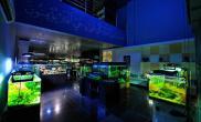 国外水族店水草缸造景AquaArt