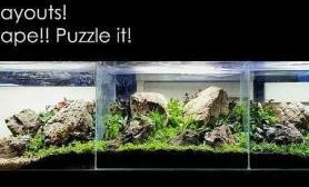 三缸合一水草缸这样的造景你见过吗?