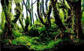 沉木造景深林风格水草采用MOSS为主