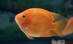 养殖观赏鱼容器有哪些要求