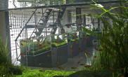 走訪ADA的自然水族美術館