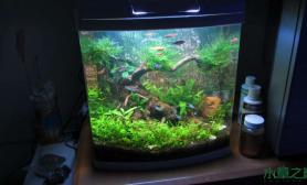 鱼缸造景看看我的小草缸给点建议