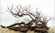 树杈沉木之美