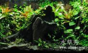 雨林生态缸欣赏