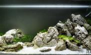 速看丨清爽的石景缸水草缸群游的灯鱼