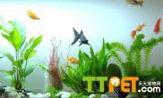 避免金鱼啃食水草的方法