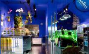 国外水族店水草缸造景NaturGallery