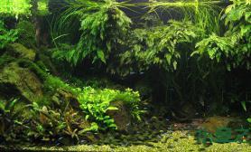 水草造景之丰收的季节