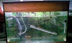 闯缸鱼有什么作用