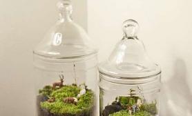 DIY苔藓盆景