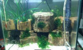鱼缸造景氧气泵连着细化器水草缸这样会好一点点一点点嘛?