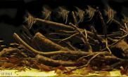 造景之路水草缸造景原生态鱼缸10
