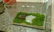 水草造景30小品缸