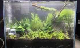 新人第一缸水草缸见笑沉木杜鹃根青龙石水草泥