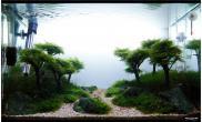 沉木青龙石水草造景45CM及以下尺寸设计18