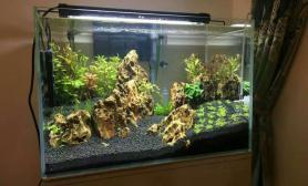 水草造景新手草缸造景水草缸高手们多给点指教水草缸谢谢鱼缸水族箱鱼缸水族箱