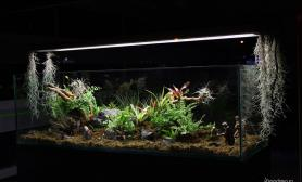 沉木青龙石动、植物造景缸-04