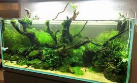 灌木丛林水草缸也可以这么美、这么美、这么美鱼缸水族箱