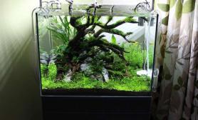 水族箱造景60cm的清新水草缸