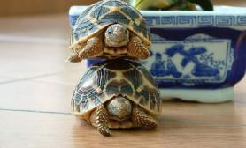 防治宠物龟烂甲病