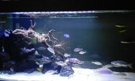 三湖慈鲷缸造景水草缸请大家点评一下鱼缸水族箱