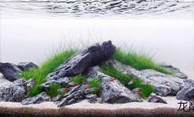 清爽草缸水草缸红绿灯群游水草缸完美享受