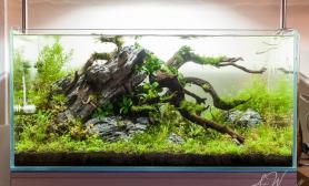 水草缸造景沉木水草泥化妆砂青龙石90CM尺寸设计86