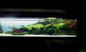 水族箱造景天野尚——40米史诗巨缸成景美照鱼缸水族箱鱼缸水族箱鱼缸水族箱