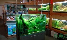 看一看ADA专卖店里那些造景