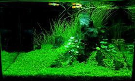 更新 小缸造景第二季  欢迎大湿点评鱼缸水草造景水族箱