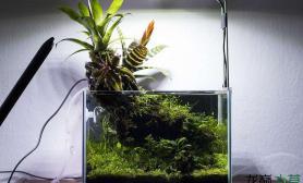 30×20×20cm小缸新技能水草缸水上和水下一样精彩