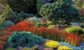 一组草做的景水草缸景色迷人