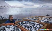近3万吨鱼类因缺氧死亡(多图)
