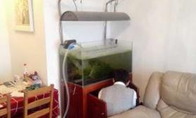 水草造景新手10月开缸回忆录(90缸教程附设备鱼的花费和位置)