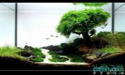 水族箱造景一棵孤独的树