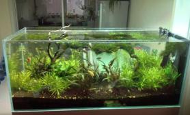 鱼缸造景水草造景