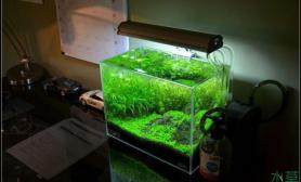 夜间书房青龙石小缸造景水草缸成景详细拍摄