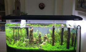 老婆说水草缸好看多了鱼缸水族箱