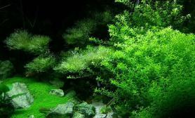 水草造景发发我家的水草