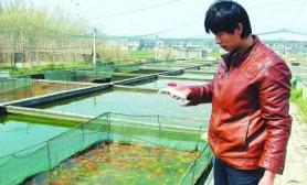"""扬州鱼池面临""""水危机""""鱼塘一次清出3000斤死鱼(图)"""