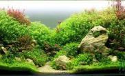 水草造景作品:水草造景(120cm)-29